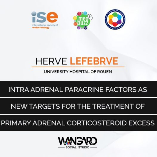 Intra Adrenal Paracrine Factors new targets for the treatment of Primary Adrenal Corticosteroid